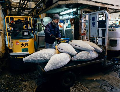 Рыбный рынок Цукидзи. Токио.