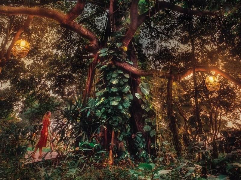 Дух джунглей. Обработка фотографии